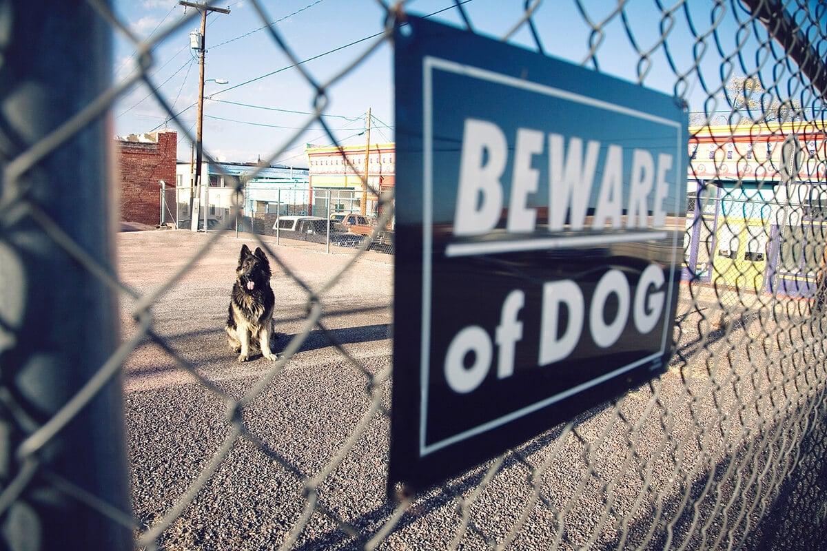 orange county dog bite lawyer